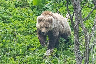 Учет и мониторинг животного мира